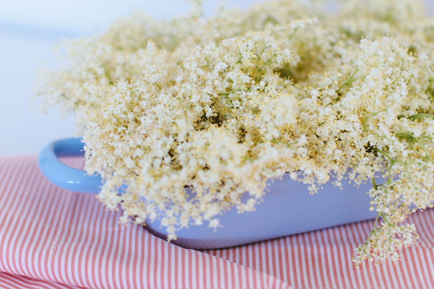 Delicious Elderflower Pancakes